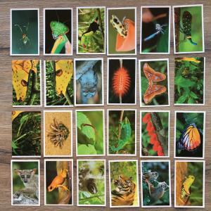 Наклейка   20 шт. Животные, Animals